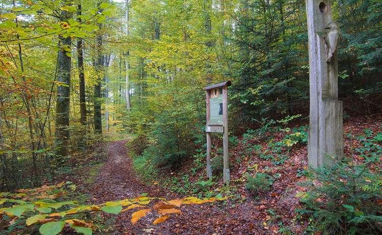 Waldlehrpfad Skulpturenweg Teisendorf
