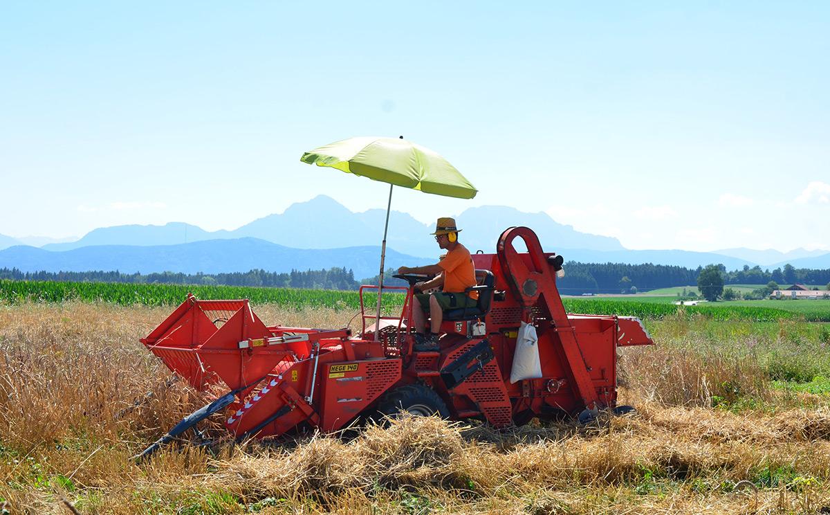 Biosphaeren Getreidegarten 1