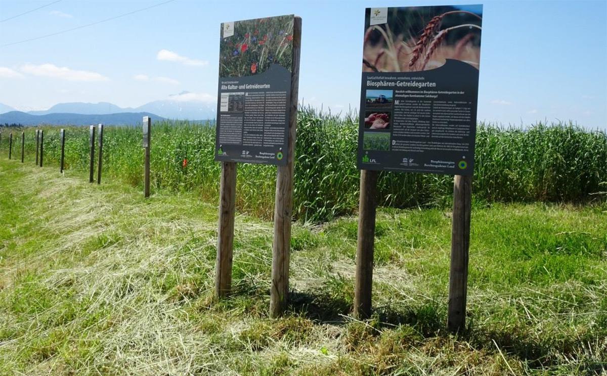 Biosphaeren Getreidegarten